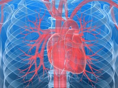 Granulomi e organi vitali