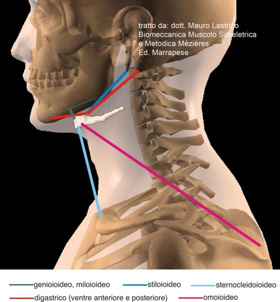 FRENULO LINGUALE CORTO E POSTURA COLONNA VERTEBRALE (Dolori cervicali, Fisioterapia, FRENULECTOMIA laser )