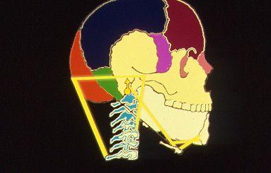 Esiste una stretta relazione  anatomo-funzionale  tra cranio, mandibola, osso ioide e rachide cervicale. Tale correlazione si esprime anche in senso sintomatologico nel caso di una Disfunzione