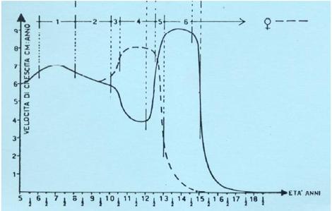 grafico velocità di crescita cm:anno