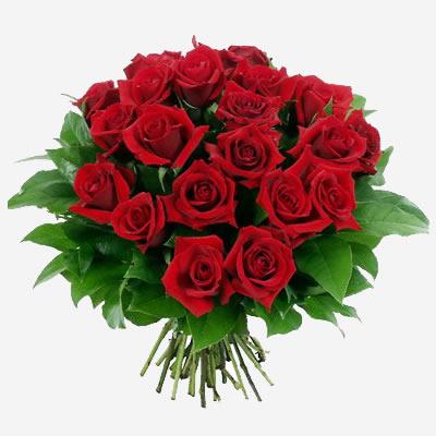 Da Gustavo Petti Parodontologo di Cagliari. Mi permetto di inviarle un mazzo di fiori per addolcire il suo Animo Gistamente Adirato