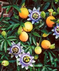 fiori-e-frutta.jpg