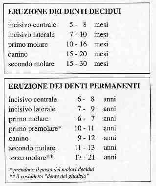 Tabella comparativa eruzione denti decidui e permanenti. Studio Dentistico Petti di Cagliari
