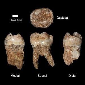 L'uomo inquinava già 400mila anni fa. Lo dicono i suoi denti